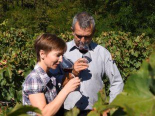 Domaine David et Nathalie Drussé à SAINT-NICOLAS-DE-BOURGUEIL - 5  ©