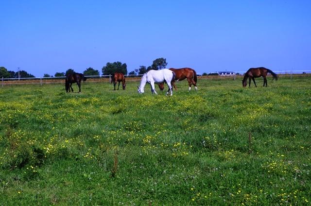 Centre Equestre de Marcilly à MARCILLY-EN-VILLETTE ©