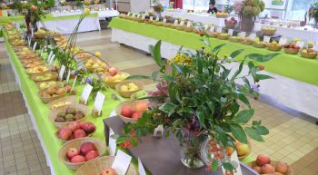 Expo-fruits-2