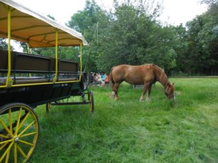 Les attelages de Villandry – Carriage rides à VILLANDRY - 8  ©