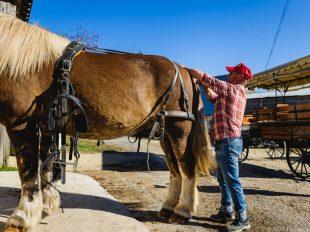 Les attelages de Villandry – Carriage rides à VILLANDRY - 3  ©