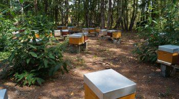 le-rucher-du-pelerin-rille-ruches