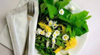 plantes comestibles-credit-pixabay
