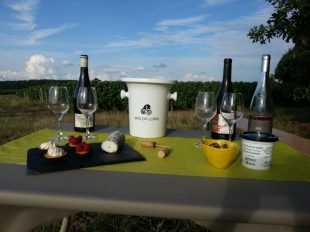 Wine Tours & wine tastings in the Loire Valley à CHANCAY - 7  © Vignoble Robert