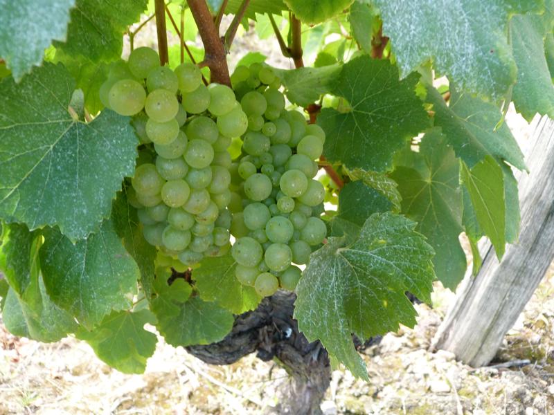 Vignes vins et randos en Val de Loire à Thoré la Rochette à THORE-LA-ROCHETTE © C-Beulle-ADT41
