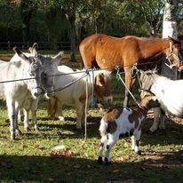 ANNULÉ Foire aux chevaux, brocante à LE PONT-CHRETIEN-CHABENET © comité des fêtes du pont chrétien
