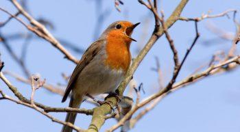 17 Avril Chant d'oiseau