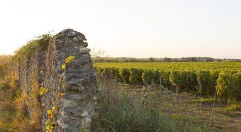 2-vignes-patrimoine_Interloire