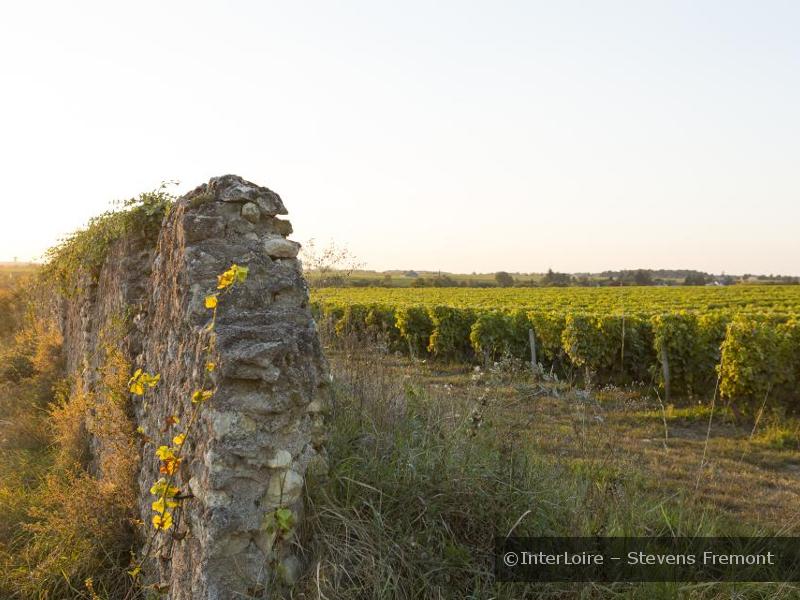 Domaine de Pallus à CRAVANT-LES-COTEAUX © Interloire
