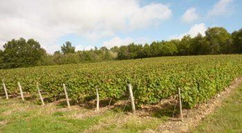 Le Menoux – vignes