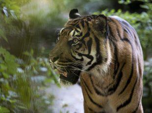 ZooParc de Beauval à SAINT-AIGNAN - 5  © ZooParc-de-Beauval