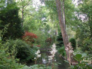 Jardin Arboretum d'Ilex à MEUNG-SUR-LOIRE - 3  ©  Jardin Arboretum d'Ilex - M. Paris