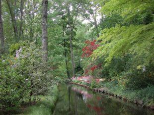 Jardin Arboretum d'Ilex à MEUNG-SUR-LOIRE - 2  ©  Jardin Arboretum d'Ilex - M. Paris