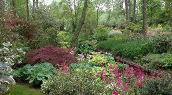 Arboretum_des_pres_des_culands _04