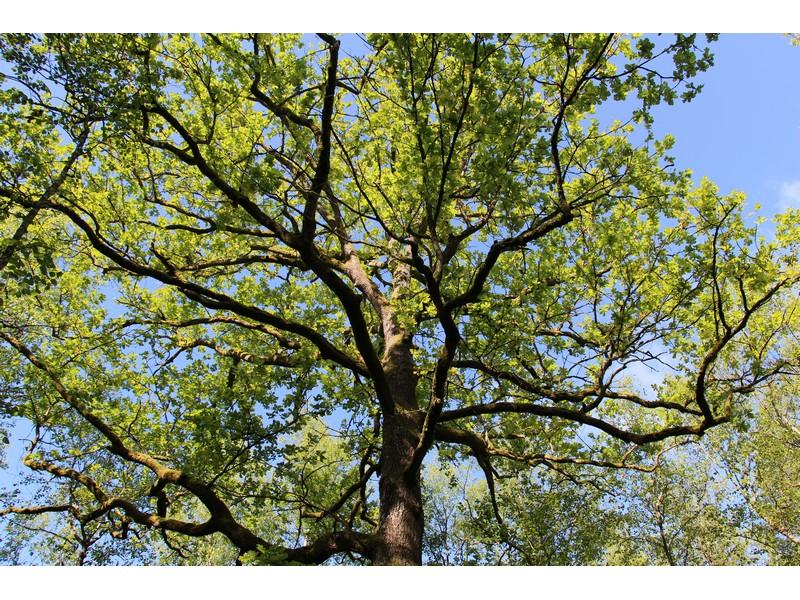 Rendez-vous nature : Gérer une forêt ? à CHAMPROND-EN-GATINE © @pnrp