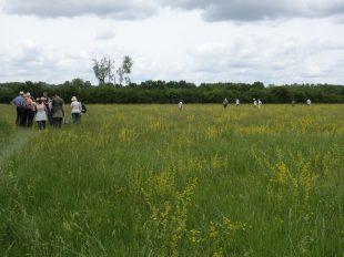 Prairies du Fouzon à COUFFY - 2  © Claude-Picoux