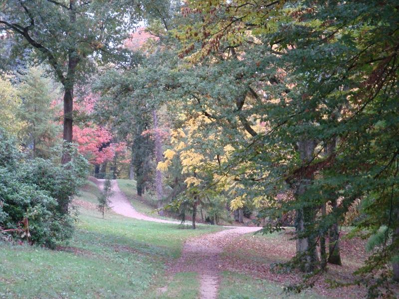 La fructification des arbres remarquables du parc du château à CHATEAUNEUF-SUR-LOIRE © OT Châteauneuf PNiffle