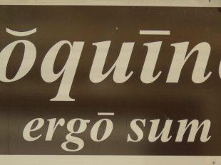Coquino ergo sum à ARGENTON-SUR-CREUSE - 3  © NE2020
