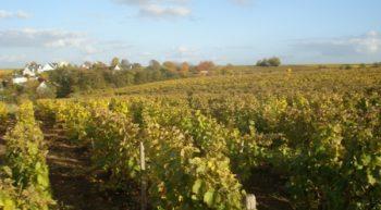 Domaine de la Fontainerie _ vignes