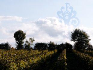 Domaine de Fontenay à BLERE - 3  ©