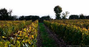Domaine de Fontenay à BLERE - 2  ©