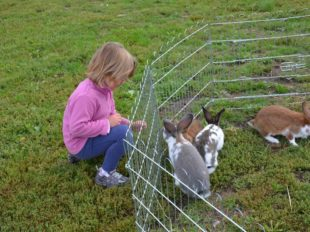 Ferme biologique et pédagogique Saute-Mouton à TIGY - 4  ©