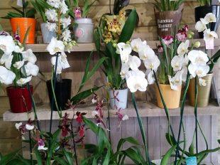 L'Atelier Fleuriste à LIGNY-LE-RIBAULT - 7  © Fleuriste l'Atelier