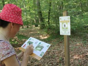 Forêt domaniale de Montargis à MONTARGIS - 4  © OT AME