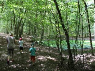 Forêt domaniale de Montargis à MONTARGIS - 2  © OT AME