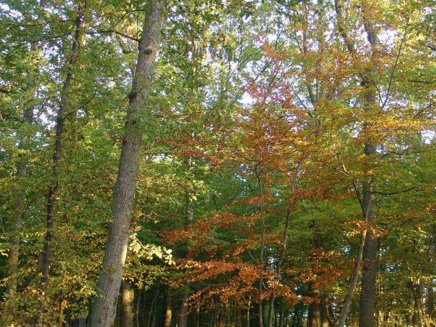 Forêt domaniale de Montargis à MONTARGIS © OT AME