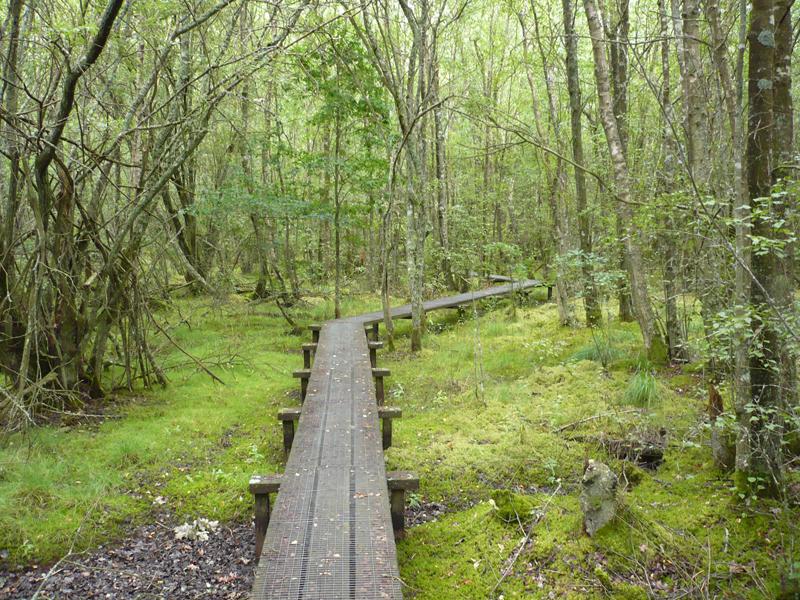 Forêt humide des Mousseuses à LA FERTE-VIDAME - 6  © CDT 28