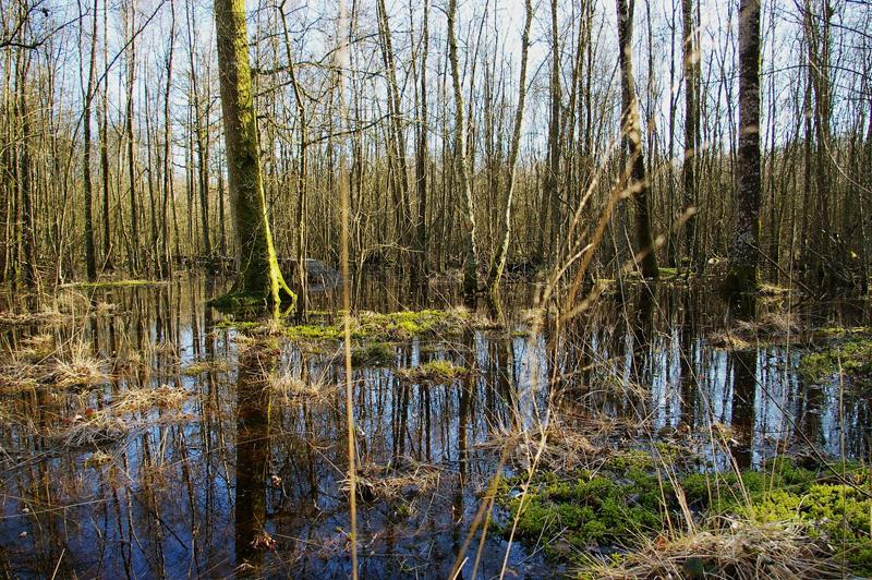 Forêt humide des Mousseuses à LA FERTE-VIDAME © CDT 28