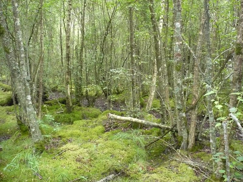 Forêt humide des Mousseuses à LA FERTE-VIDAME - 5  © CDT 28