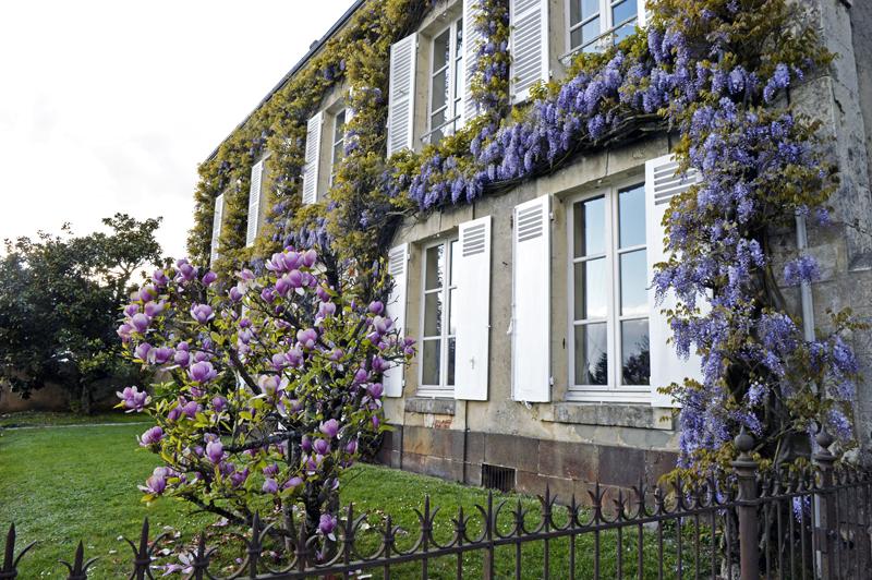 Les couleurs du Verger à BEAUMONT-LES-AUTELS - 9  © maison avec sa glycine au printemps