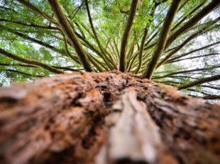 Arboretum National des Barres à NOGENT-SUR-VERNISSON - 6  © Vanessa Liorit