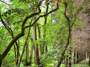 Arboretum National des Barres à NOGENT-SUR-VERNISSON - 7  © Vanessa Liorit