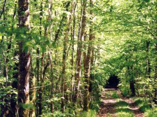 De l'arbre à l'eau à PAUCOURT - 10  © ADRT du Loiret