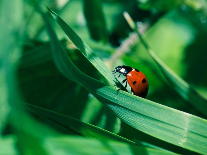 Journées de la Biodiversité à INGRANNES © A. Leguay
