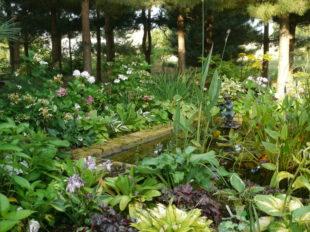 Le Jardin de Mireille en Touraine Angevine à CHANNAY-SUR-LATHAN - 4