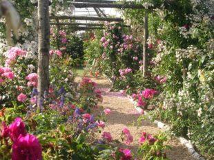 Les Jardins de Roquelin à MEUNG-SUR-LOIRE - 2  ©  Les Jardins de Roquelin