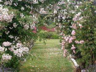 Les Jardins de Roquelin à MEUNG-SUR-LOIRE - 4  ©  Les Jardins de Roquelin