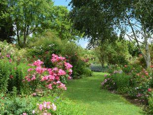 Visite commentée de la Roseraie de Morailles à PITHIVIERS-LE-VIEIL - 3  © otgp