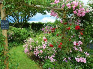 Visite commentée de la Roseraie de Morailles à PITHIVIERS-LE-VIEIL - 2  © otgp