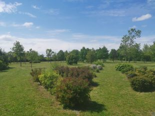 Arboretum d'Orgères-en-Beauce à ORGERES-EN-BEAUCE - 2  © MTCB