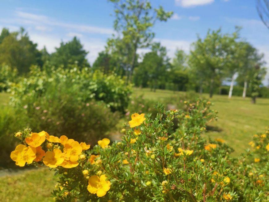 Arboretum d'Orgères-en-Beauce à ORGERES-EN-BEAUCE © MTCB