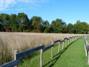 Parc Naturel Départemental – Prairie du Puiseaux et du Vernisson à MONTARGIS - 5  © F. Maret