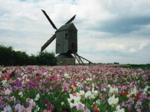 Moulin à vent «Fernand Barbier» à LEVESVILLE-LA-CHENARD - 3  © Moulin à vent