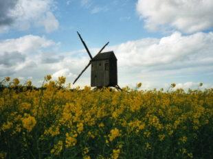 Moulin à vent «Fernand Barbier» à LEVESVILLE-LA-CHENARD - 5  © Moulin à vent