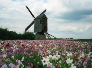 Moulin à vent «Fernand Barbier» à LEVESVILLE-LA-CHENARD - 7  © Moulin à vent