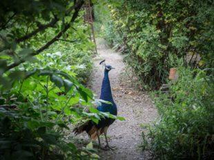 Les Jardins de Roquelin à MEUNG-SUR-LOIRE - 5  ©  A. Rue
